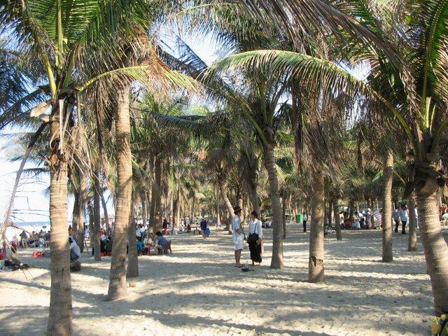 Hàng Dừa xanh mướt bóng râm